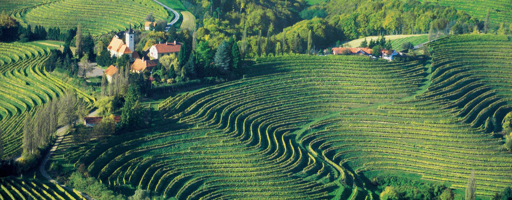 Image result for vinogradi